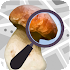 Mushroom Identify - Automatic picture recognition 2.40