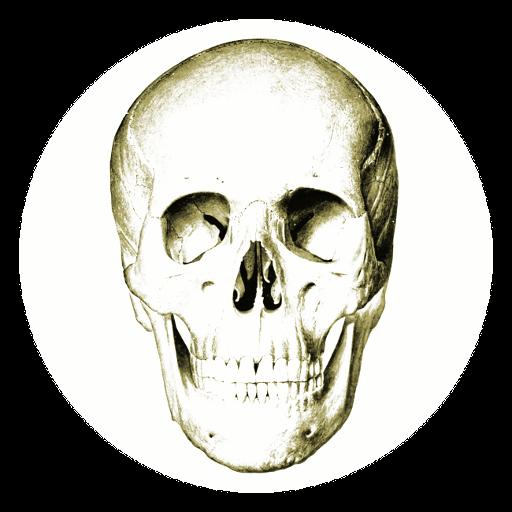 Baixar Anatomy Quiz para Android