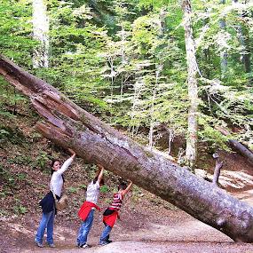 by Bogdan Ene - People Family ( work, nature, family, trees, forest, kids, KidsOfSummer )