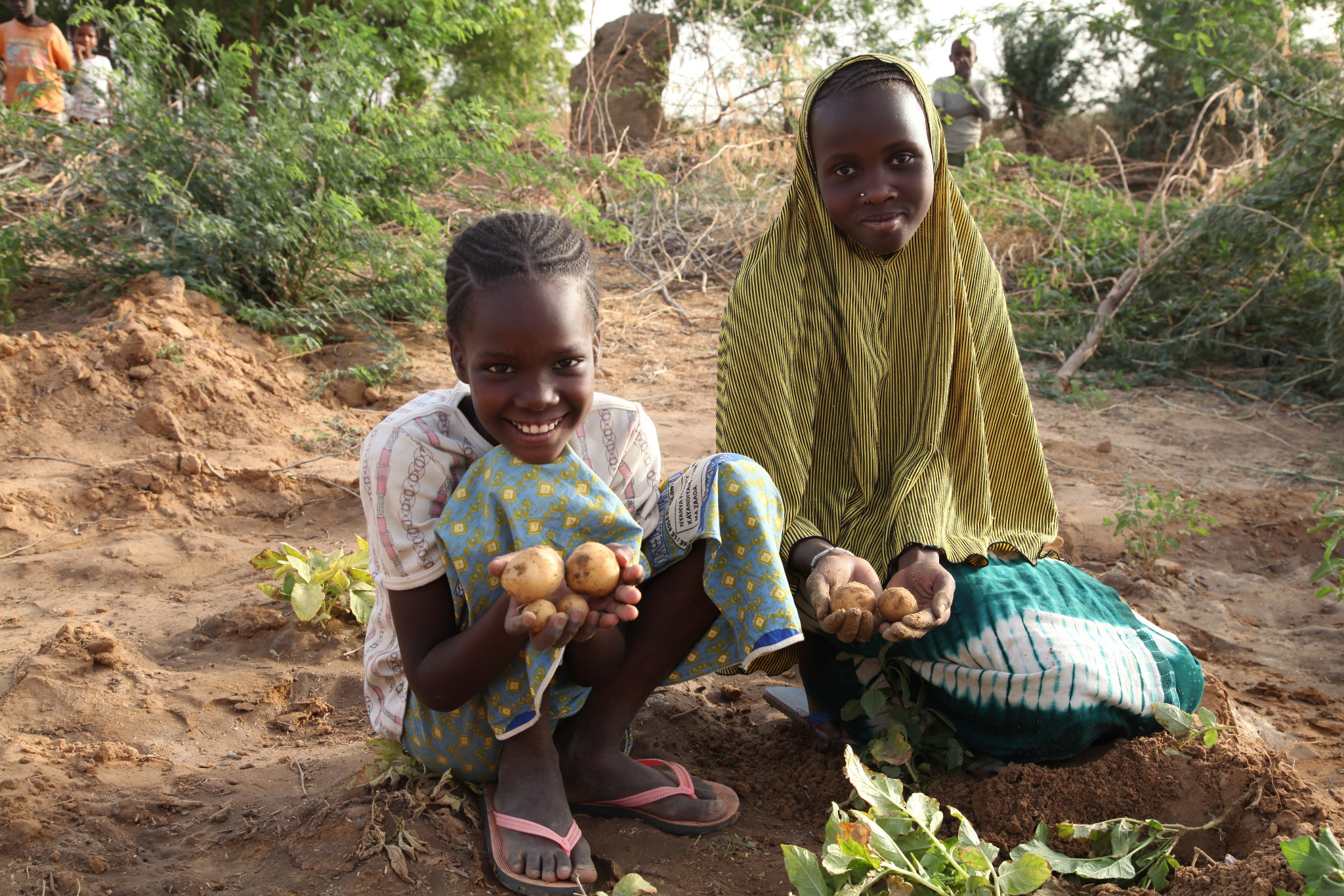 Photo: Schoolgirls show off their crop of potatoes harvested from a Plan-funded school garden in Tillaberi District, Niger. Plan provided the fence, fertilizer, seeds, the water pump and training on gardening. They are now expecting 400kg of produce from the garden.