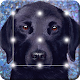 Smart Puppy Dog Labrador Cute App Lock for PC-Windows 7,8,10 and Mac