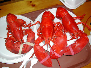 Photo: Swarming Lobsters!!!