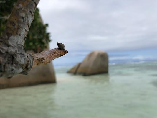 Lumachina in mezzo al mare di fnc