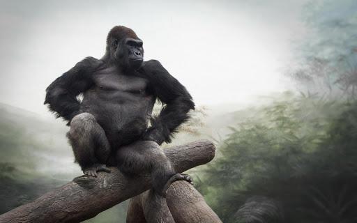 Gorilla Live Wallpaper