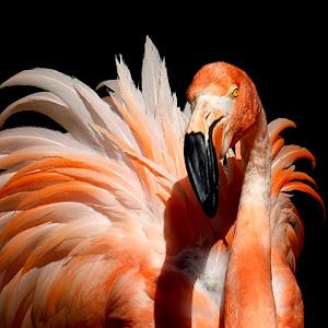 Flamingo Pose3 test.JPG