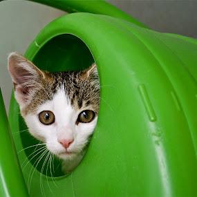 ziza by Almasa Dalan - Animals - Cats Portraits