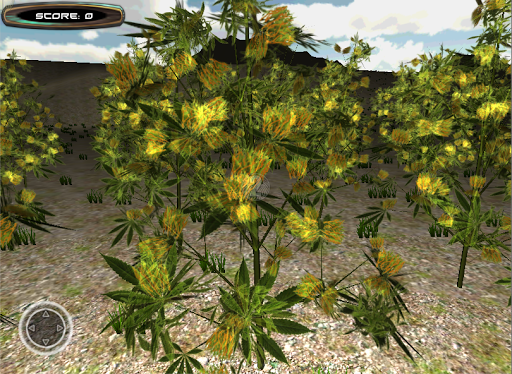 Cannabis 3D Plantation