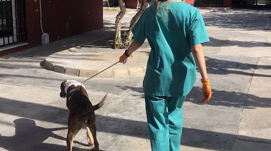 Almería licita la mejora y la ampliación del Centro Zoosanitario