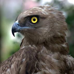 by Vijayendra Desai - Animals Birds ( pwctaggedbirds )