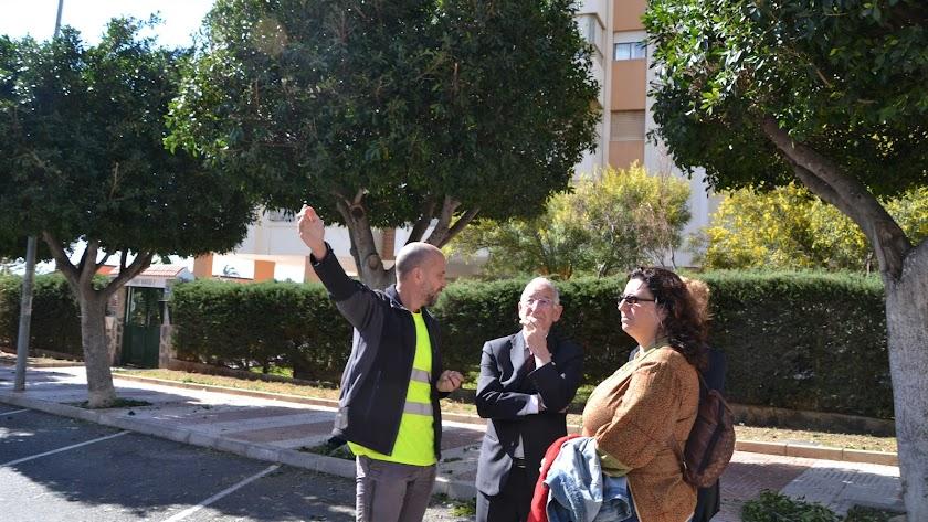 Técnicos e ingenieros, con el alcalde, en Aguadulce donde se está realizando la poda.