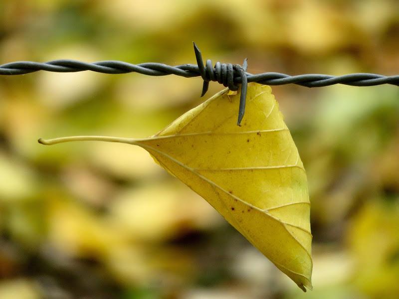 foglia imprigionata di mariellaturlon