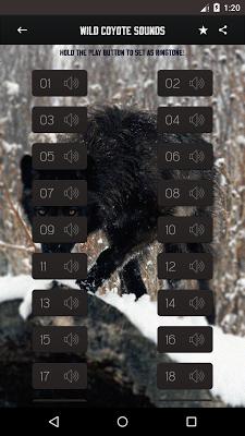 Wild Coyote Sounds - screenshot