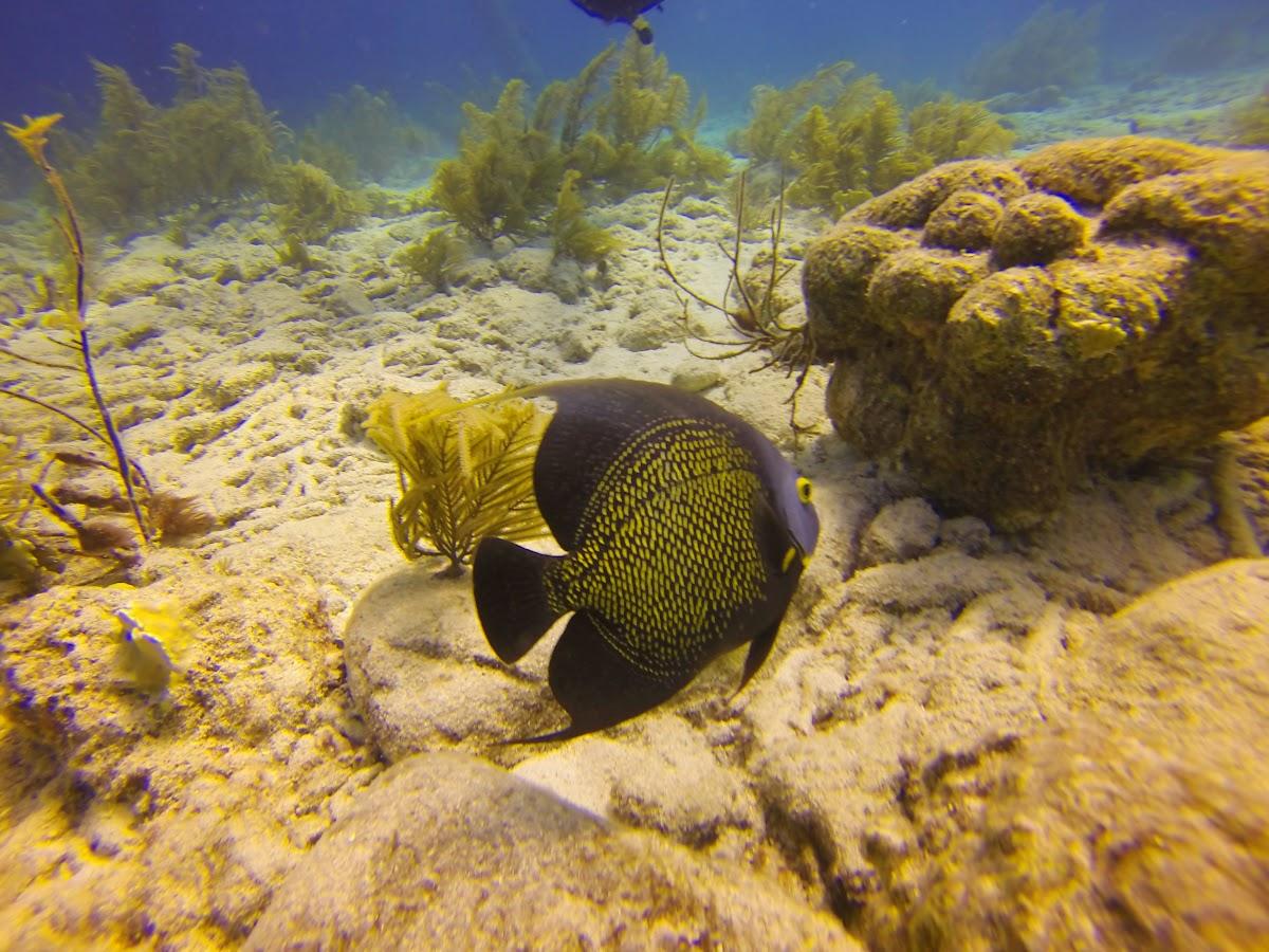 Bonaire. Diving Salt Pier. Salt Pier - A Top Diving Site