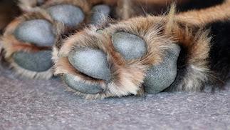 La asociación Animales en Apuros Almería alertó de la situación del animal.