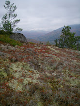 Photo: Though we were far below treeline, it looked like we were on the tundra in this beautiful spot.