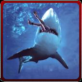 Angry Shark Revenge Attack 3D