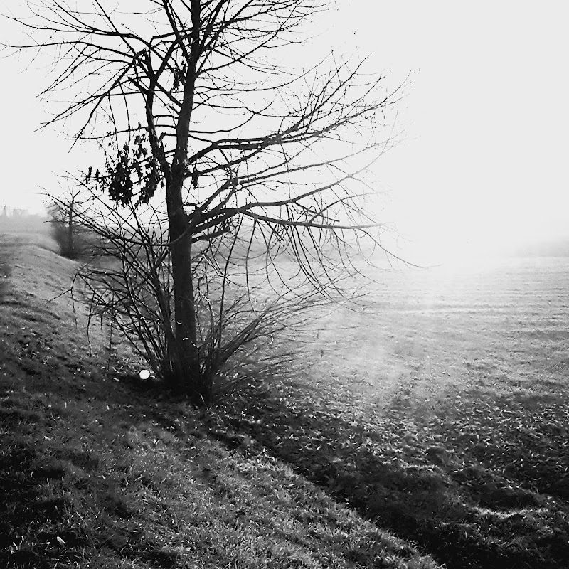 All'alba di Fabi-bw