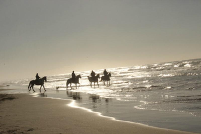 il vento è un cavallo..senti come corre per il mare di Bern@