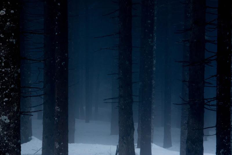 Blue woods di nena