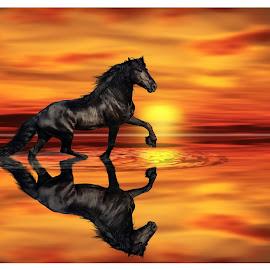 An Arabian Sunset by Simon  Rees - Animals Horses
