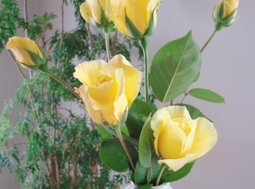 Rose Bush - Natural Soil Foods Recipe