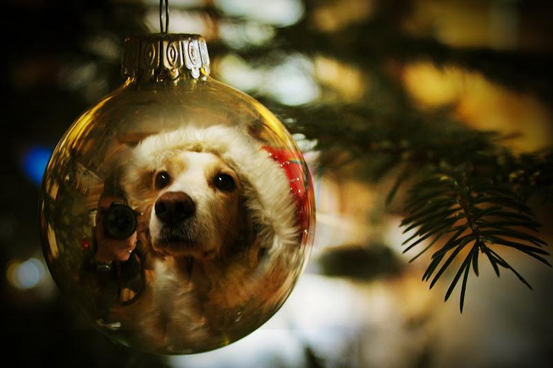 Ogni maledetto Natale di Photo Art 71