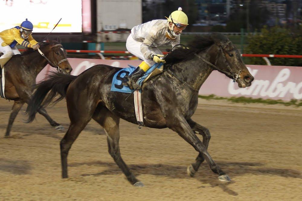 Florissante (Seeking The Dia) conquista Handicap (1100m-Arena-VSC).