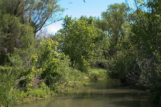 Photo: Putah Creek - South Fork Reserve at Mace Blvd