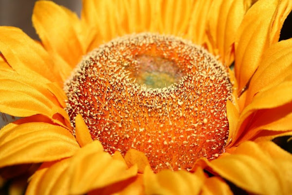 Fake Sunflower di Pearl