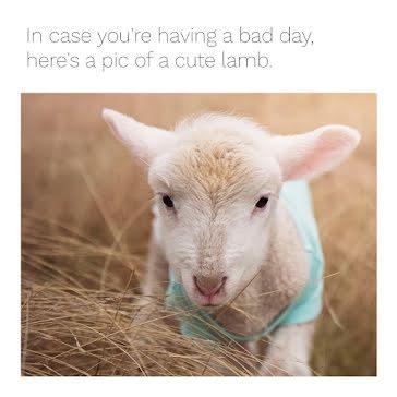Cute Lamb - Instagram Post template