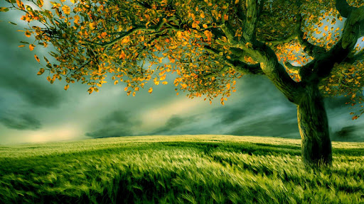 Tree Live Wallpaper