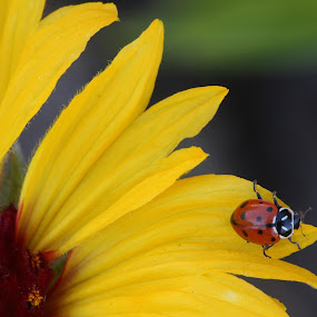 Sitting Pretty by Manuel Balesteri - Animals Insects & Spiders