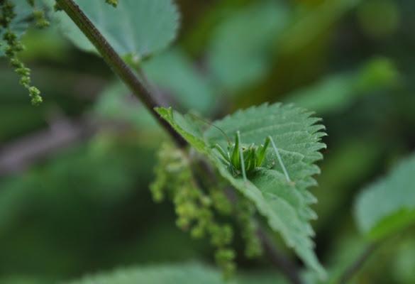 Nascosto nel verde di alessandra79