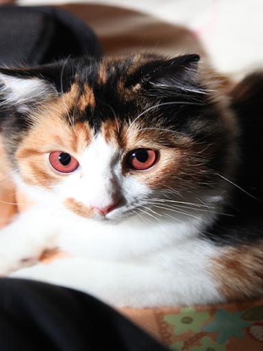 Aha-Experience Scenes of Cats 1.1 Windows u7528 3