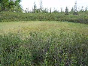 Photo: Путь на оз.Итермавод, всего 400м, но через березку, стланник, болото...
