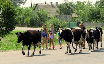 Photo: Pastereczki i kowboj