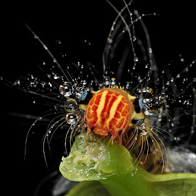 Caterpillar by Reeve Lim - Animals Insects & Spiders