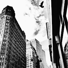 """Photo: """"Synchronicity...""""  Birds have a synchronous relationship with the city.  They fly with such brazen freedom through the man-made caverns soaring above the frenetic flow of the city below.    New York Photography: midtown skyscrapers and a bird on a cloudy day.    You can view this post at my site here:  http://nythroughthelens.com/post/38226993456/new-york-city-skyscrapers-and-a-bird-midtown  -  Tags: #photography  #newyorkcity  #newyorkcityphotography  #nyc  #nycphotography  #newyorkphotography  #cityphotography  #urbanphotography  #city  #urban  #manhattan  #bird  #mobilephotography  #mobilography  #iphonography  #iphoneography  #squareformatphotography  #phonephotography  #prose  #writing  #blackandwhite  #blackandwhitephotography"""