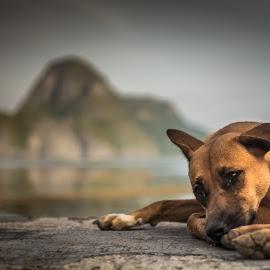 I miss You.... by Joao Carvalho - Animals - Dogs Portraits