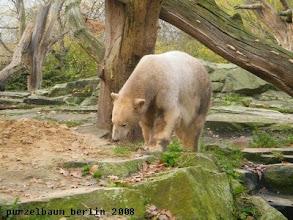 Photo: Eisbaerchen Knut inspiziert den Sandhaufen ;-)