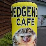 hedgehog cafe HARRY in Tokyo in Tokyo, Tokyo, Japan