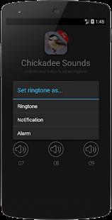 Chickadee bird sounds - náhled