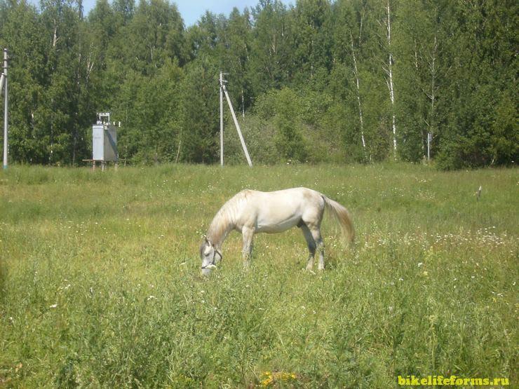 Лошадь в Завидово
