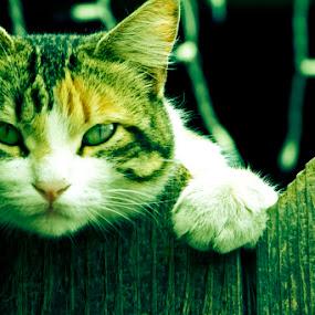 by Yoy Escosura - Animals - Cats Portraits