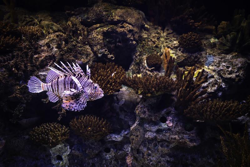 Il mondo marino di Fiore Doncovio