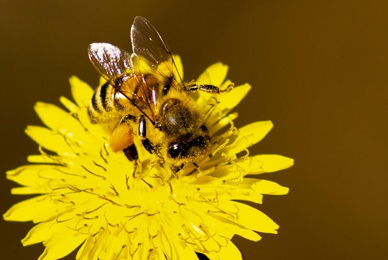 Bagno di polline di mialma81