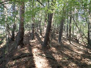歩きやすい林に