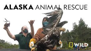 Alaska Animal Rescue thumbnail