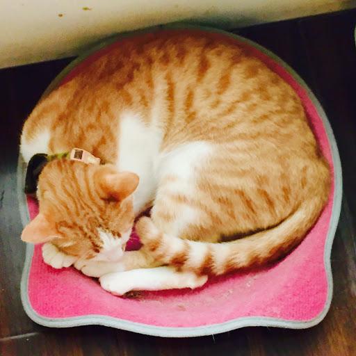 橘光呼嚕X背包cat