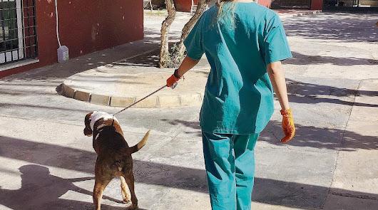 Más de 700 animales del Zoosanitario han conseguido un hogar durante este 2020